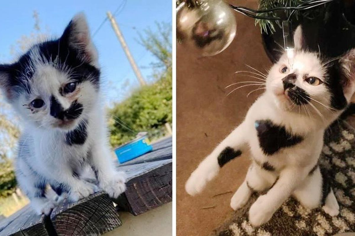 Kitten So Happy to Find Wonderful Family to Hold onto After Roaming the Streets Seeking Home