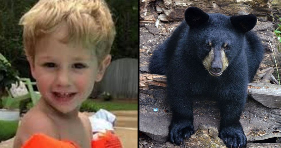 3-Year-Old Who Went Missing For 2 Days Says Bear Looked After Him