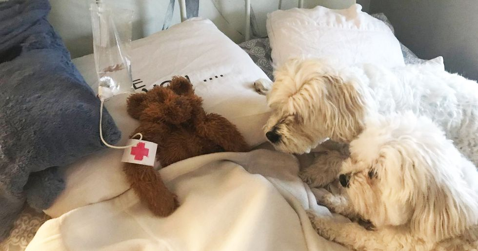 Man Finds His Dog's Stuffed Toy, Nurses It Back to Health With Tiny Homemade Hospital