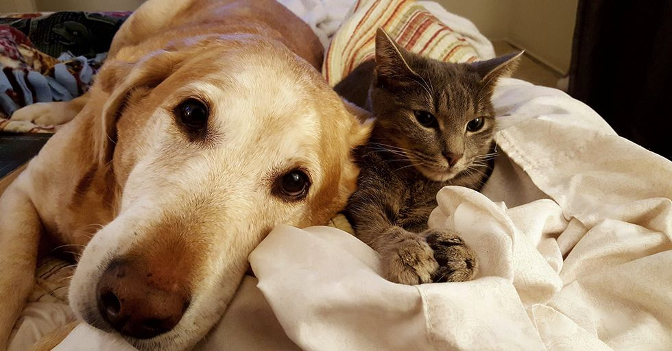 Dogs and Cats Being Adorable Best Friends