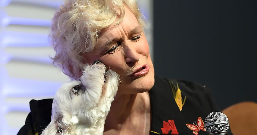 Glenn Close Runs an Instagram Account for Her Dog Pip, and It's Absolutely Perfect