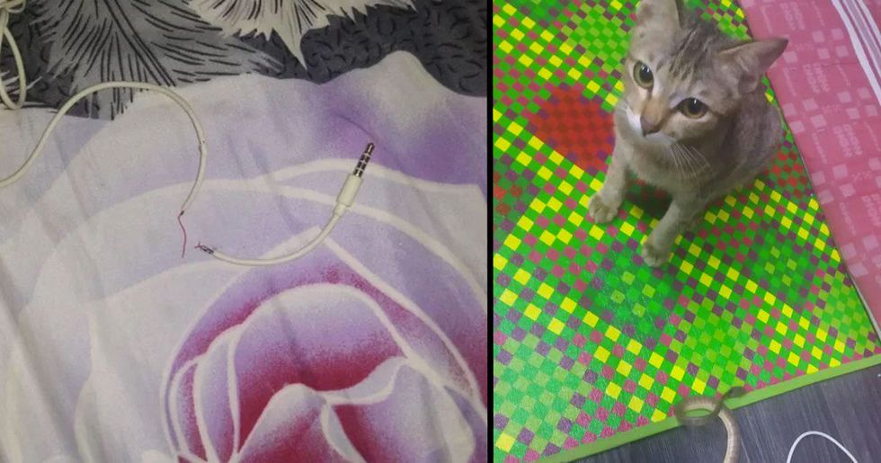 Kitten Destroys Owner's Earphones but Returns With a Snake as a Replacement