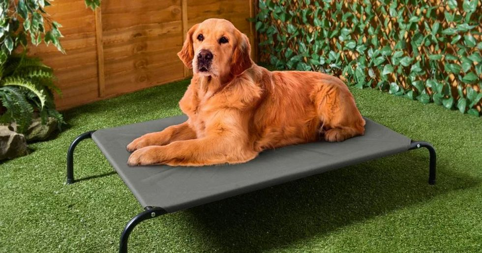 Sun Loungers for Dogs Are Now a Thing That Actually Exists