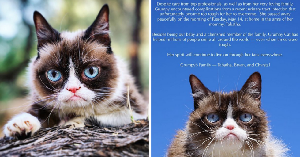Grumpy Cat Has Died at Age 7