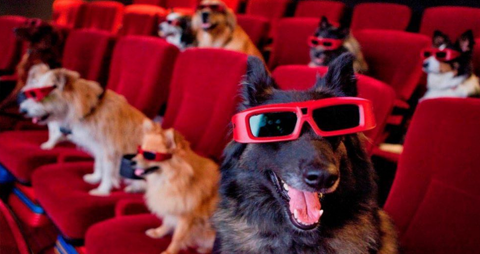 This Movie Theater Sells Wine – And Lets You Bring Your Dog Along