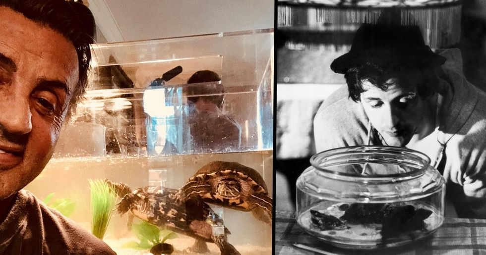 Sylvester Stallone Stills Owns 45-Year-Old Turtles from Rocky