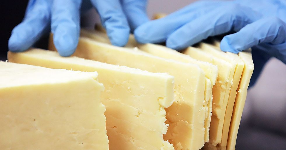 This Museum Displays 'Human Cheese' Made From Celebrity Skin Bacteria
