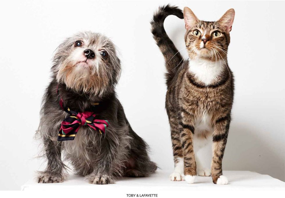 Supermodel Pets: Richard Phibbs' Humane Society Adoption Portraits