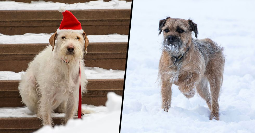 You Can Now Get Jail Time for Leaving Your Dog Out in the Cold Snow