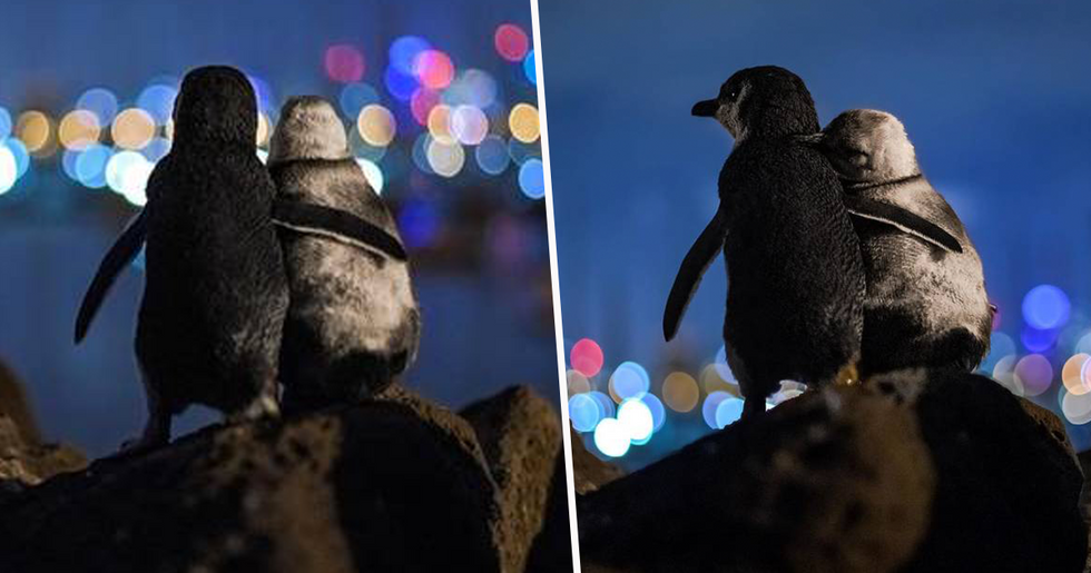 Two Widowed Penguins Enjoying Melbourne Skyline Wins Best Picture of 2020