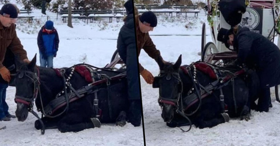 NYC Horse Collapses During Carriage Ride on Icy Road and Is Forced To Continue
