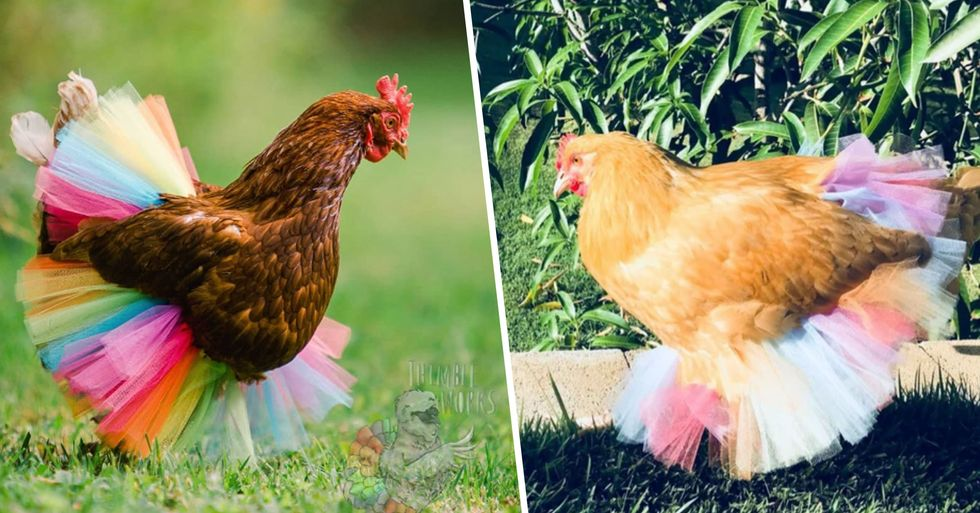 You Can Finally Buy a Tutu for Your Pet Chicken