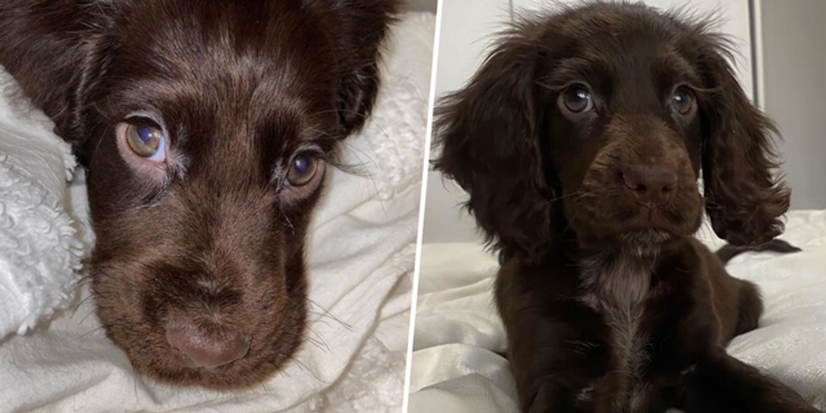 Puppy Melts Hearts With Long Eyelashes That Make Her Look Like a Disney Character