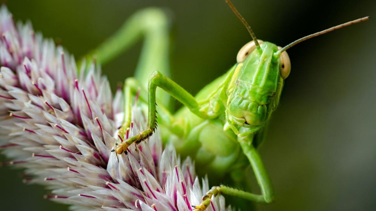 Scientists Sound Alarm About Insect Apocalypse