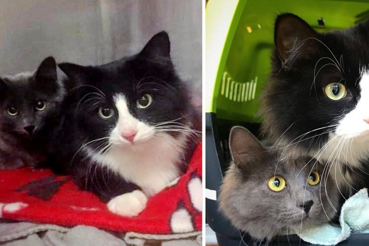 Kitten Brought Her Sister to the Woman Who Helped Her, and Ready to Leave Street Life Behind