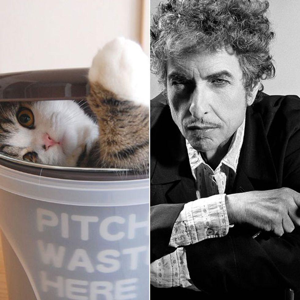 Unlikely Birthday Twins Alert: Maru + Bob Dylan