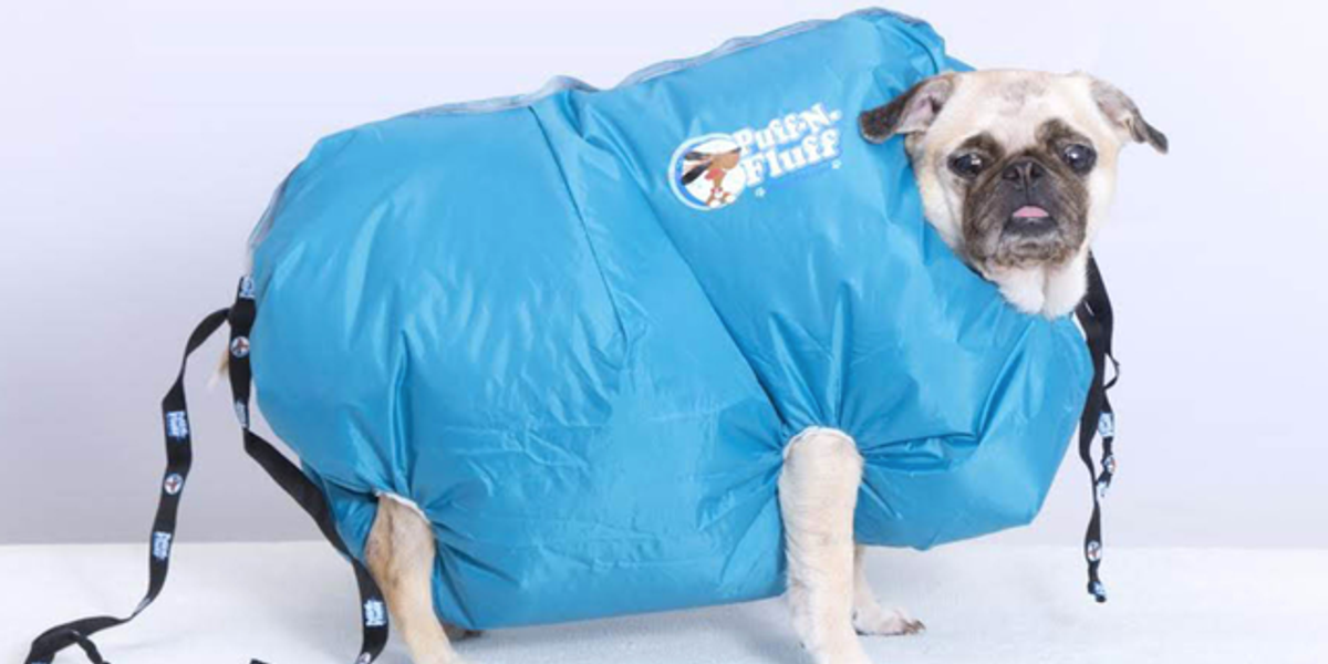 You Can Now Buy an Adorable Full-Body Dryer Jacket for Your Wet Dog
