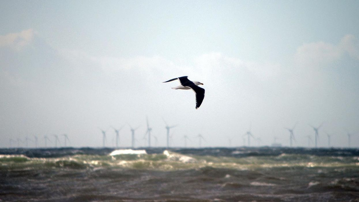 Offshore Wind Power Is Ready to Boom. Here's What That Means for Wildlife