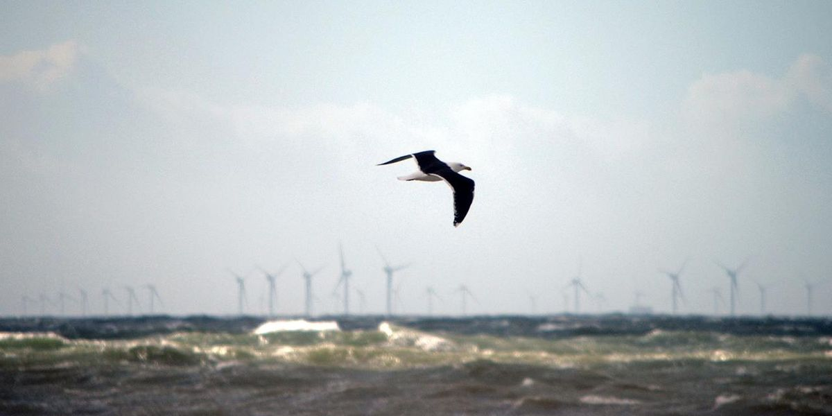 Offshore Wind Power Is Ready to Boom. Here's What That Means for Wildlife - EcoWatch
