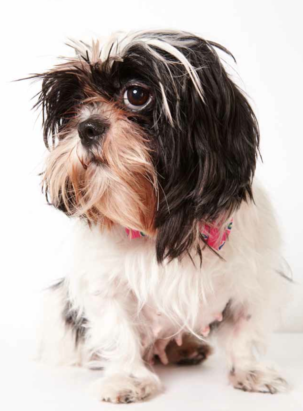 Supermodel Pets Part 3: More Humane Society Adoption Portraits by Richard Phibbs