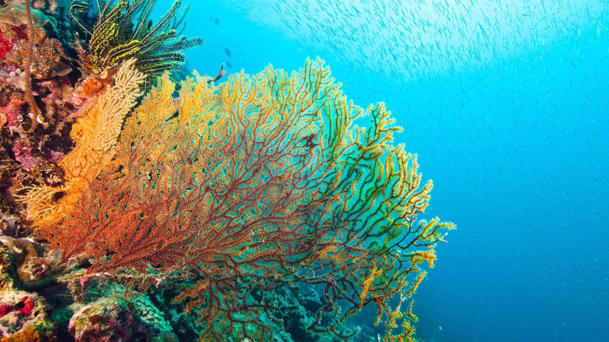 The World's Most Breathtaking Coral Reefs