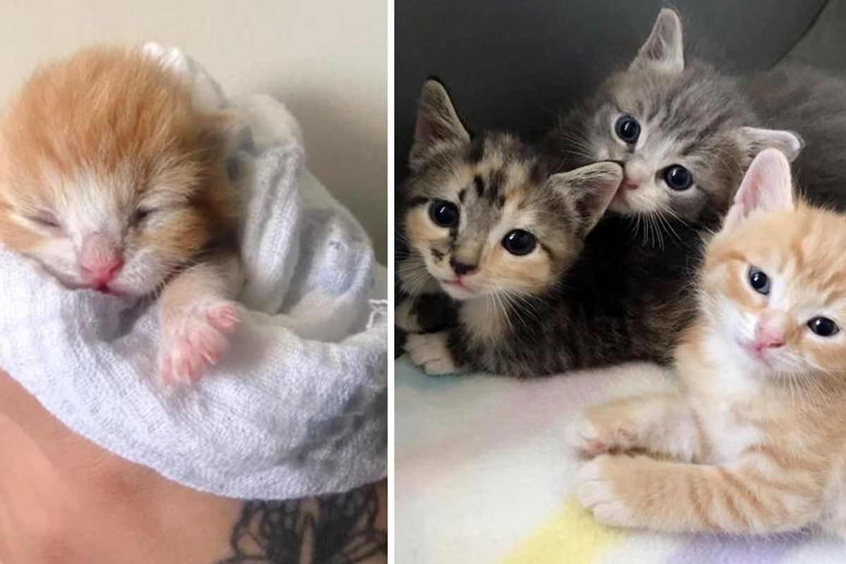Kitten Found Left Behind in Garden, Weeks Later, They Discovered the Rest of His Family