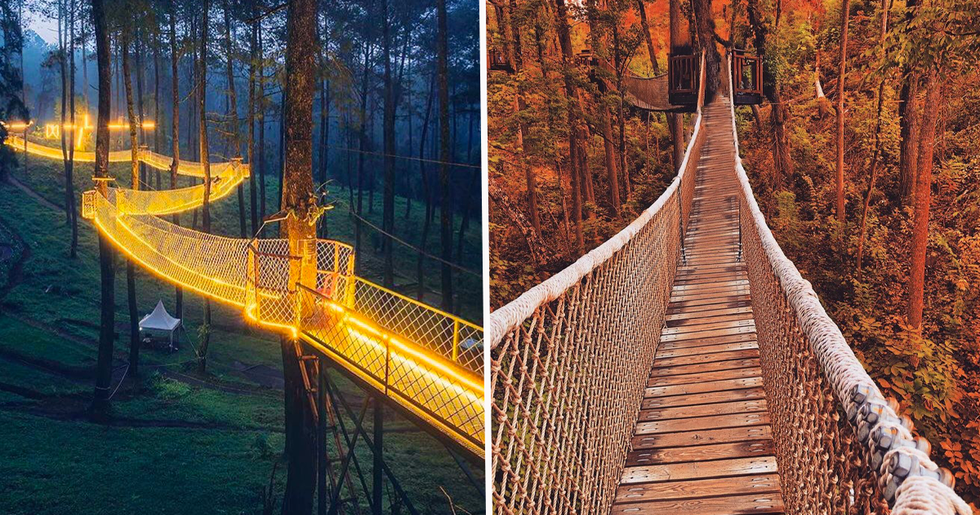 You Can Visit a Treetop Skywalk in Tennessee That Has the Longest Tree-Based Bridges in America