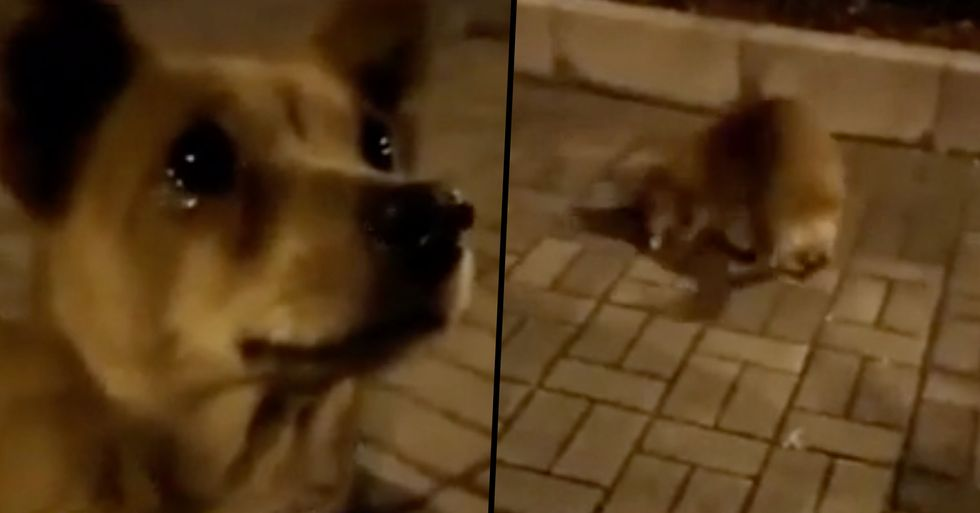 Stray Dog Cries 'Tears of Joy' After Stranger Feeds Him on The Street