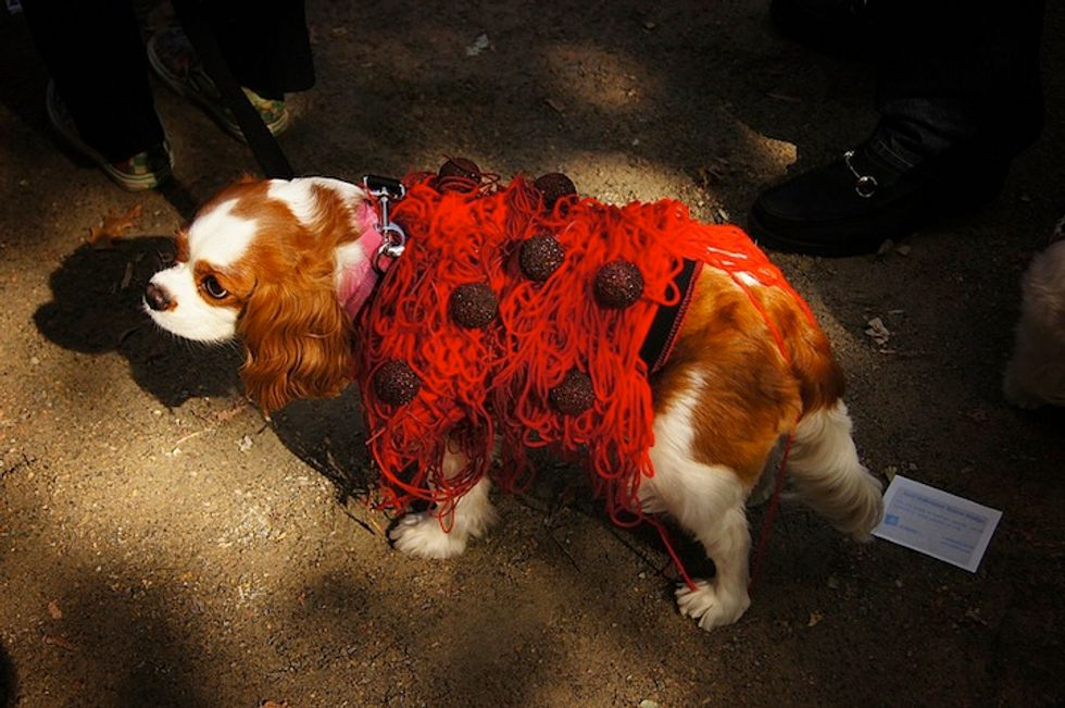 Mark Your Calendars: The Tompkins Square Halloween Dog Parade Is This Saturday