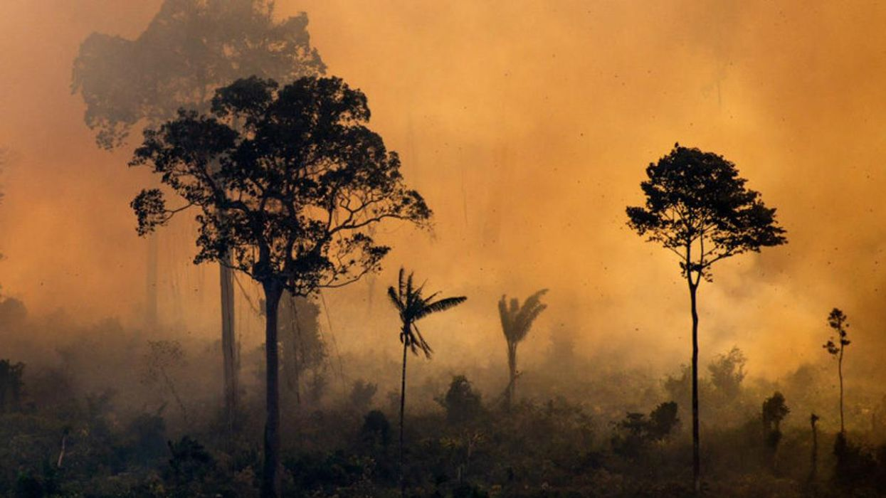 Amazon Rainforest on the Brink of Turning Into a Net Carbon Emitter, Study Warns