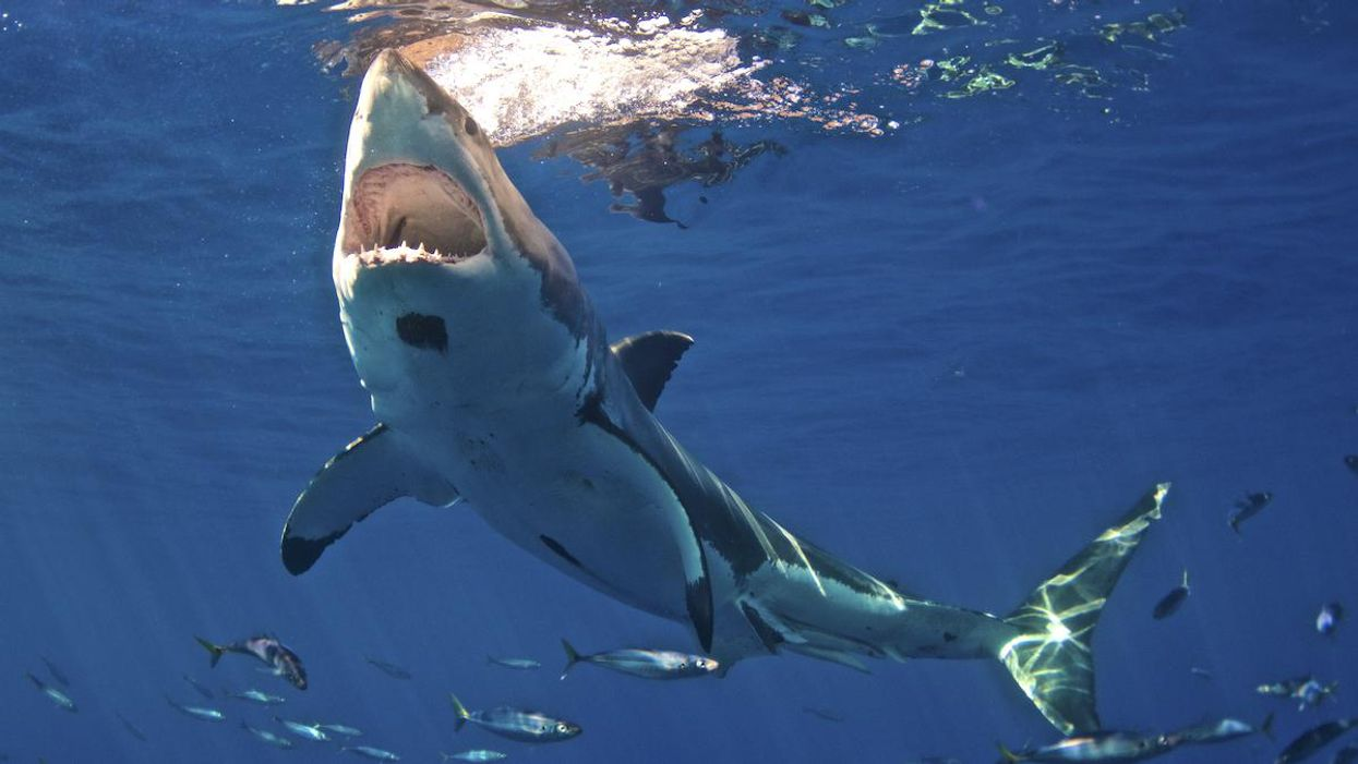 Shark and Ray Populations Declining Rapidly, Scientists Call for Urgent Fishing Limits