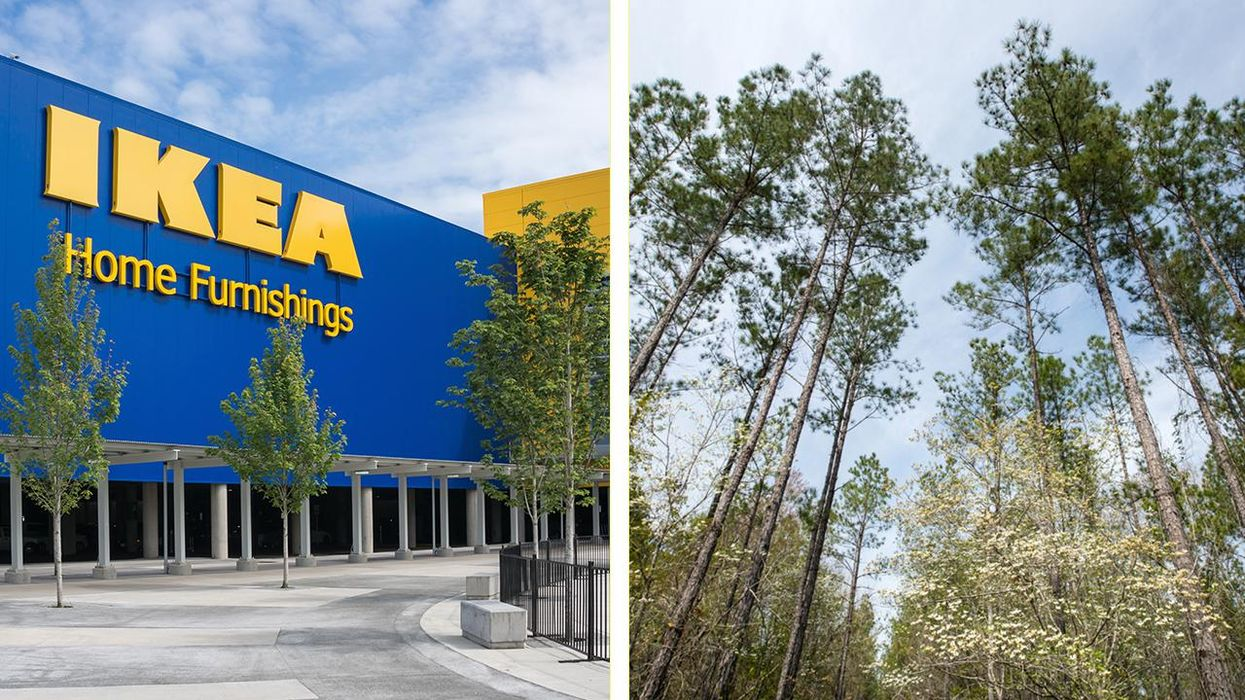IKEA Parent Company Buys Georgia Forest With Pledges to Manage It Sustainably