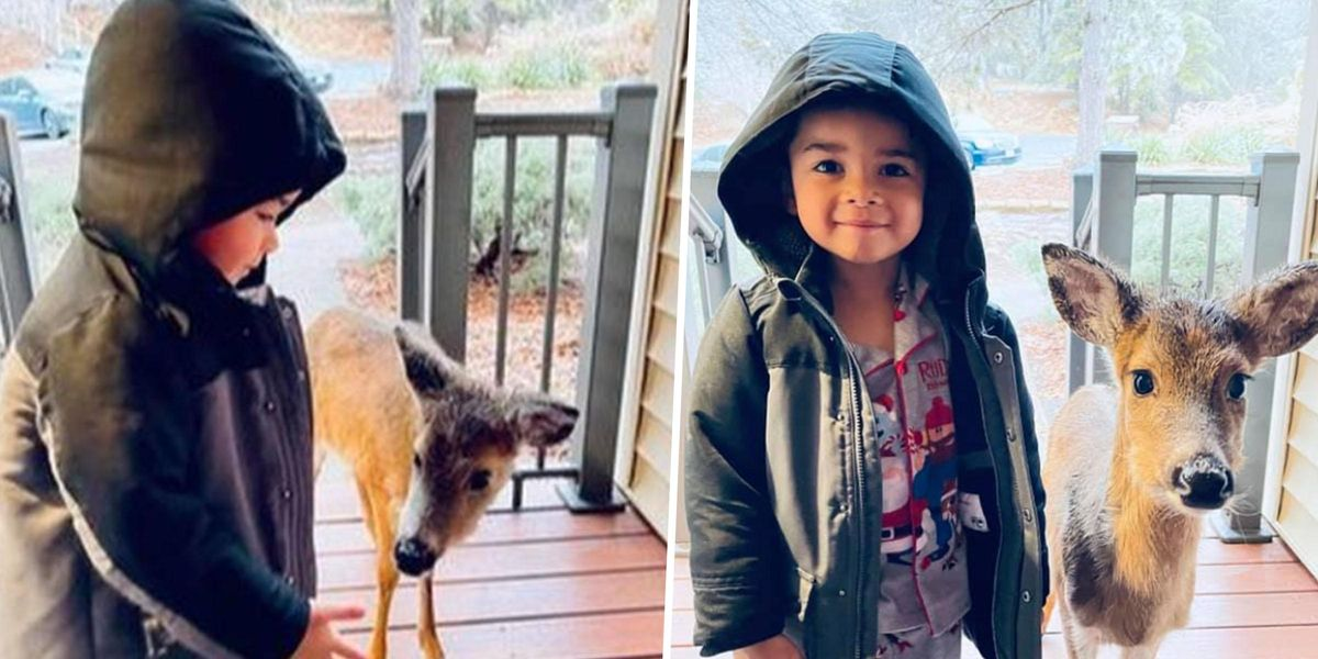 Shocked Mom Turns to Find 4-Year-Old Son Brought Stray Deer to Door of Their Home