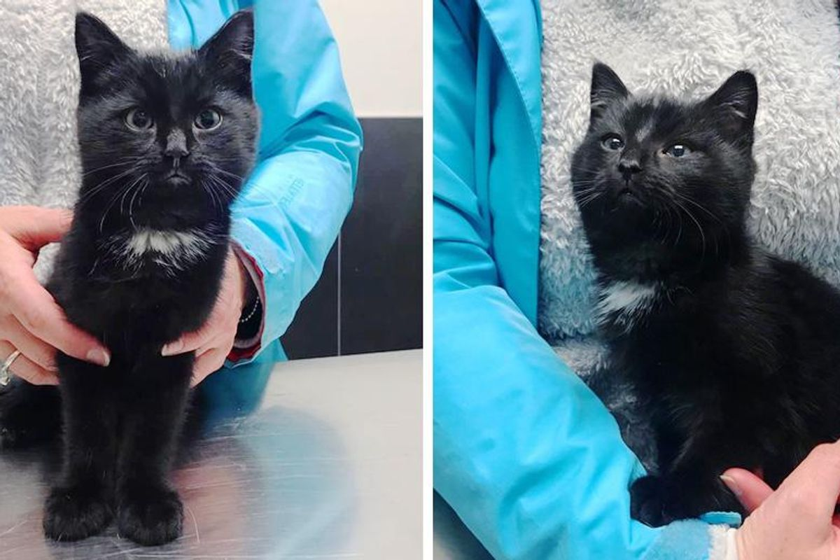 Shy Kitten Found Hiding in Bushes, Becomes Brave and Thrives with Help of Kind People