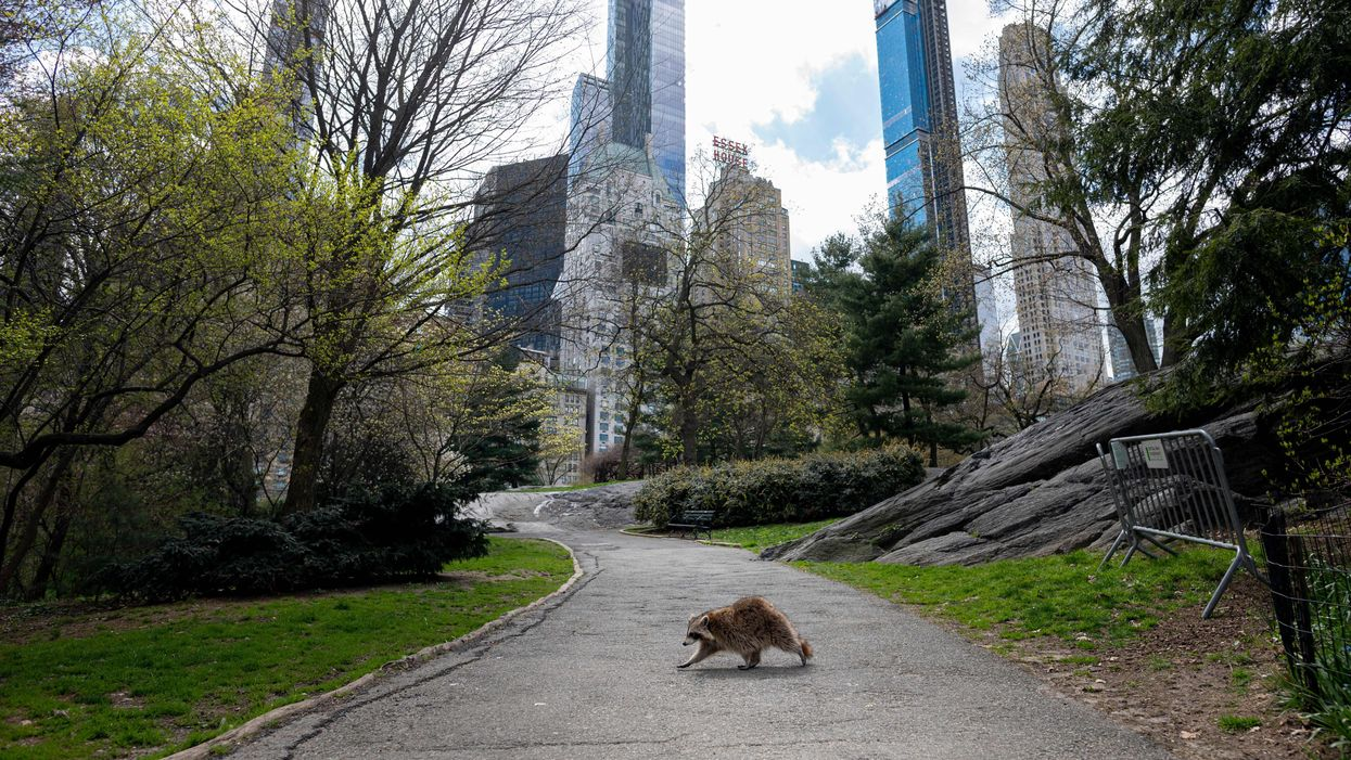 A deserted Central Park in lockdown, illustrating an article on Stoic tips for surviving lockdown.