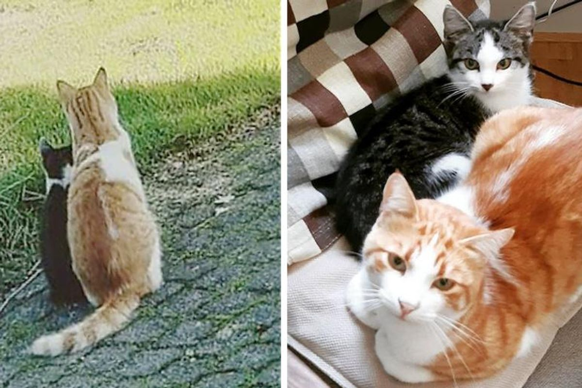 Cat Brought Stray Kitten Home from Backyard and Raised Him into Happiest Cat