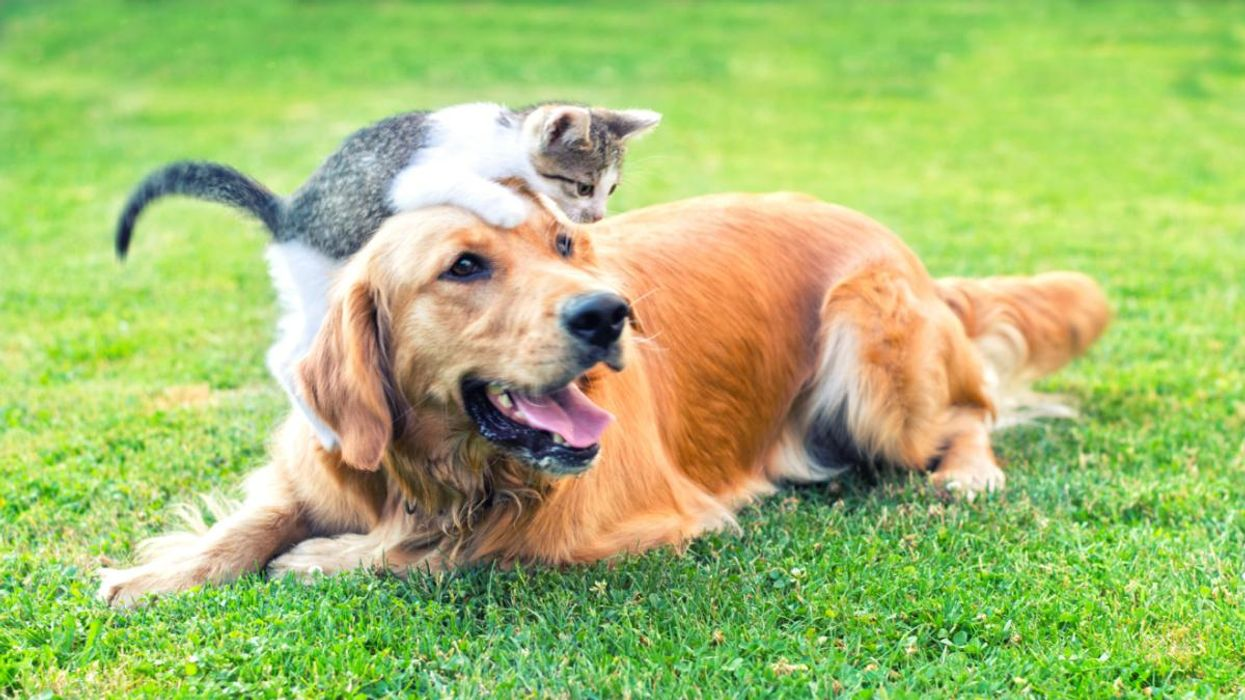 Climate Change Is Prolonging Flea and Tick Season for Pets