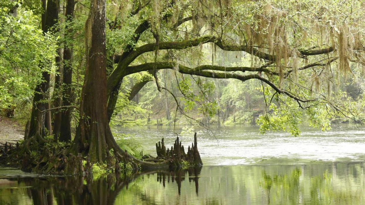 How Protecting Wetlands Can Help the Climate