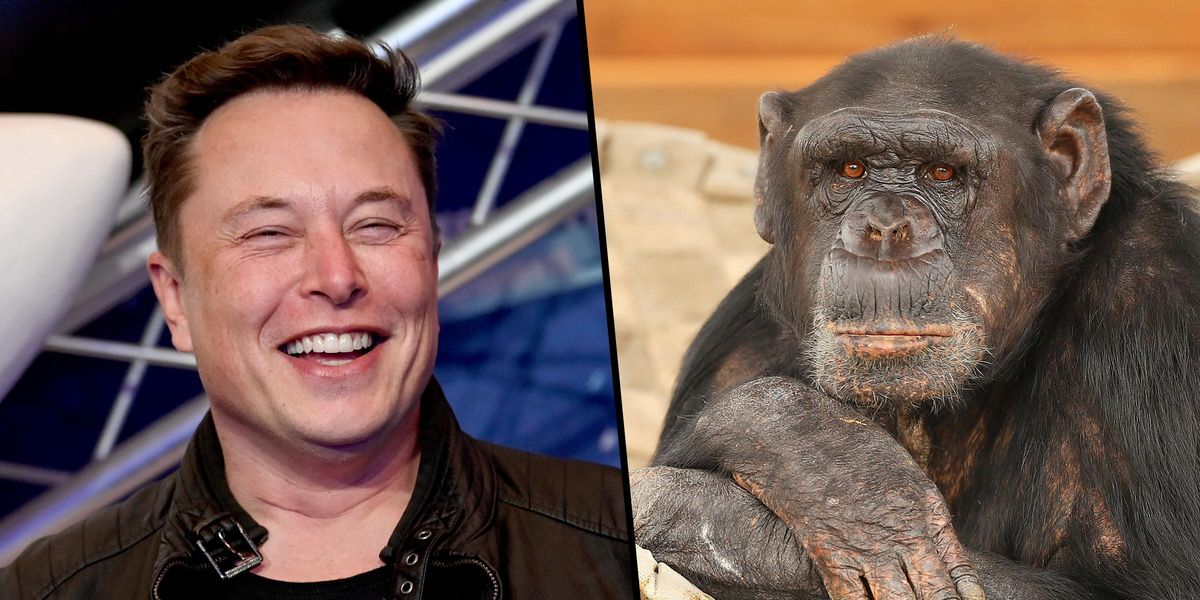 Elon Musk Claims He Has a 'Monkey With a Brain Implant That Can Play Video Games With His Mind'