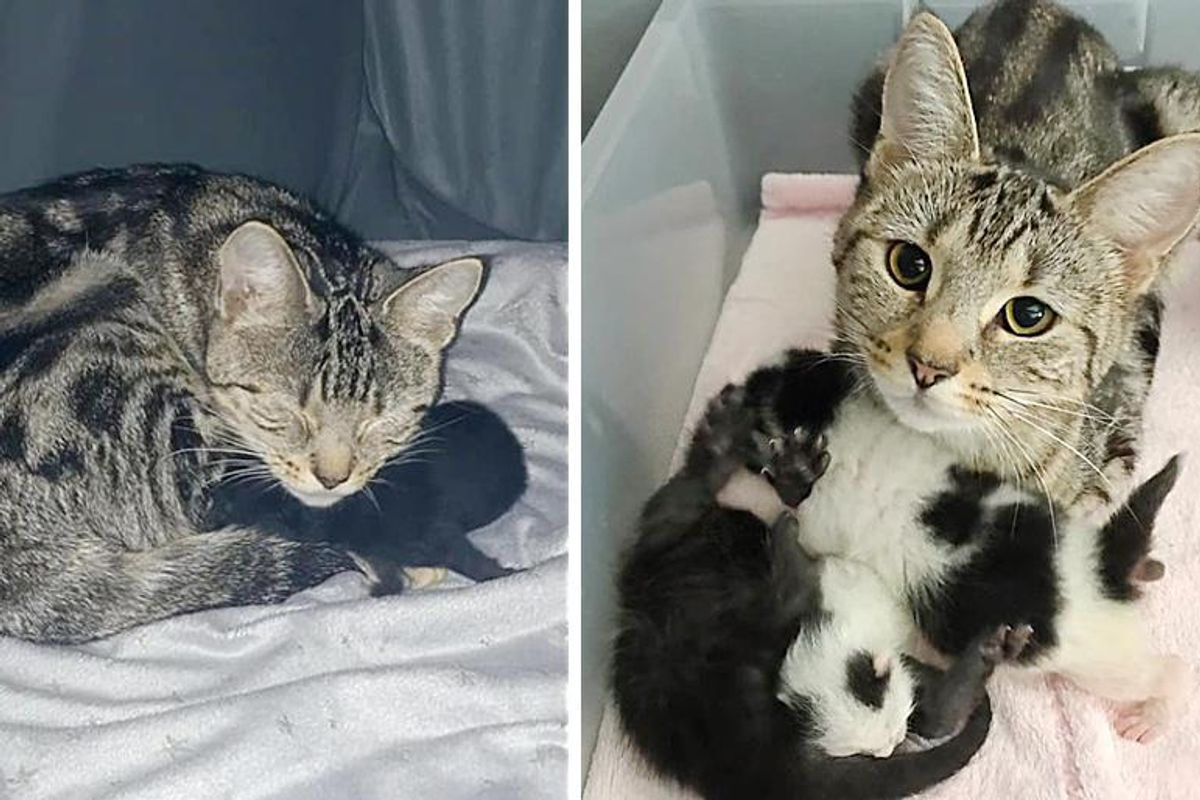 Cat Bounced Back with Her Own Kitten, Adopts 2 Others and Helps Them Thrive