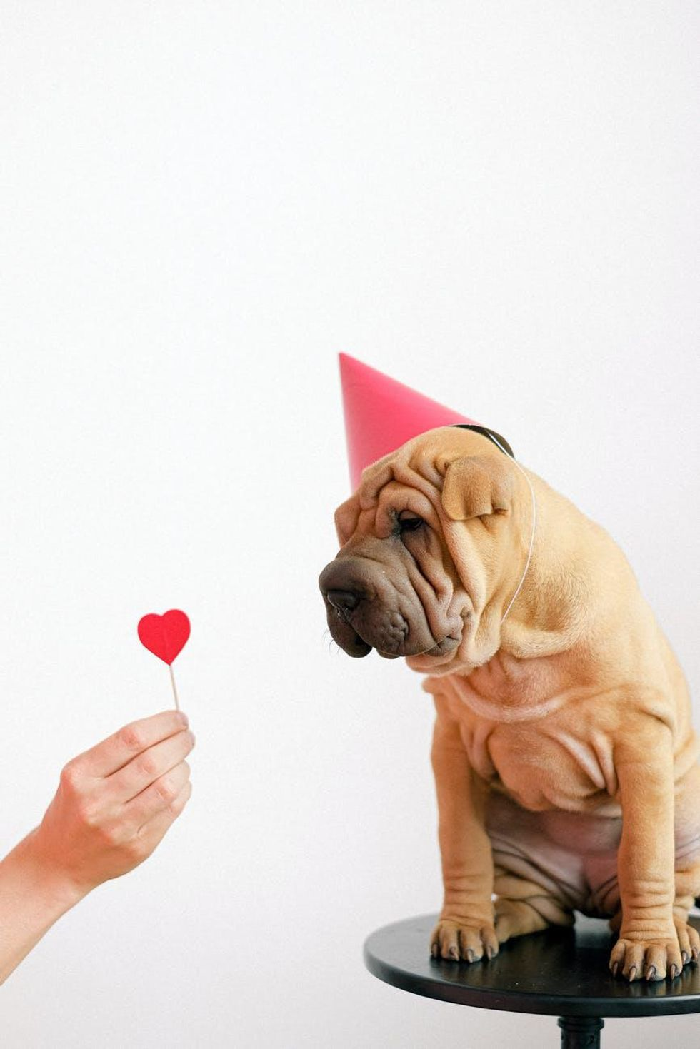 5 Valentine's Day Gifts For Your Dog, Because They Deserve It