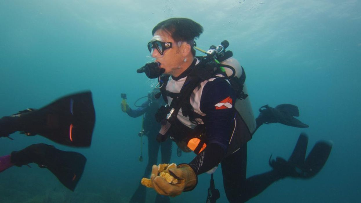 NFL Green Tackles Coral Restoration Project in Florida Ahead of Super Bowl LV