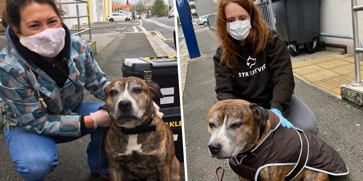 Vets Are Giving Care on the Streets to Hundreds of Homeless People's Pets