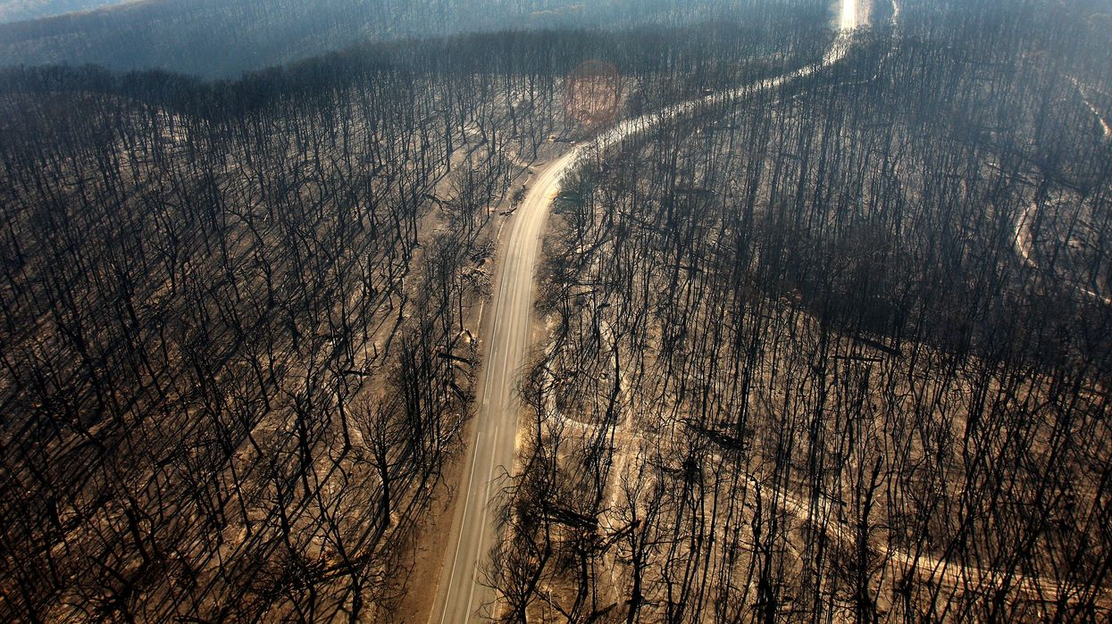 A road cuts through a dead forest after a wildfire.