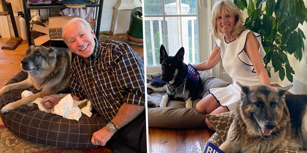 Joe Biden's German Shepherd Becomes First Rescue Dog To Live in the White House