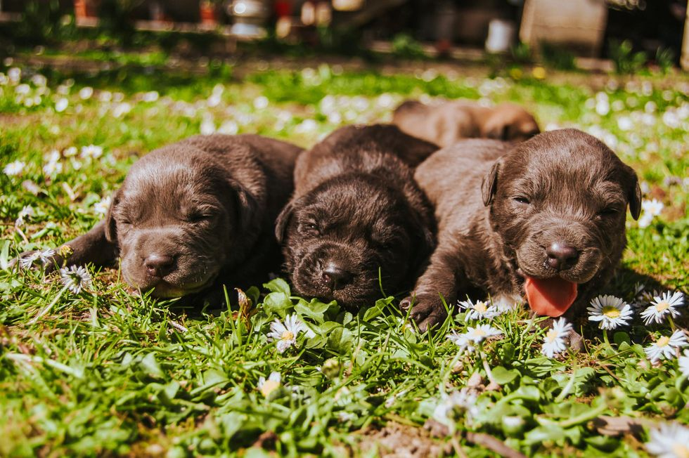 How to Take Care of a New Puppy During Quarantine