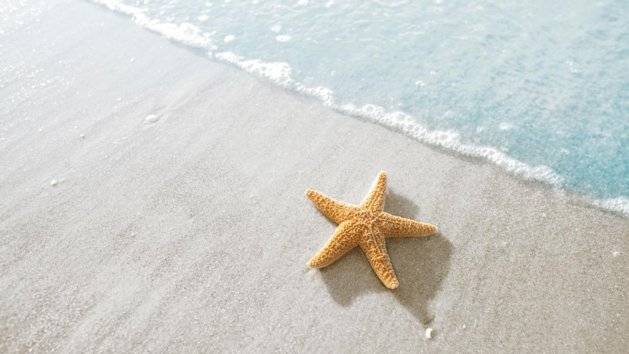 Rare Starfish Fossil Answers the Mystery of How They Evolved Arms