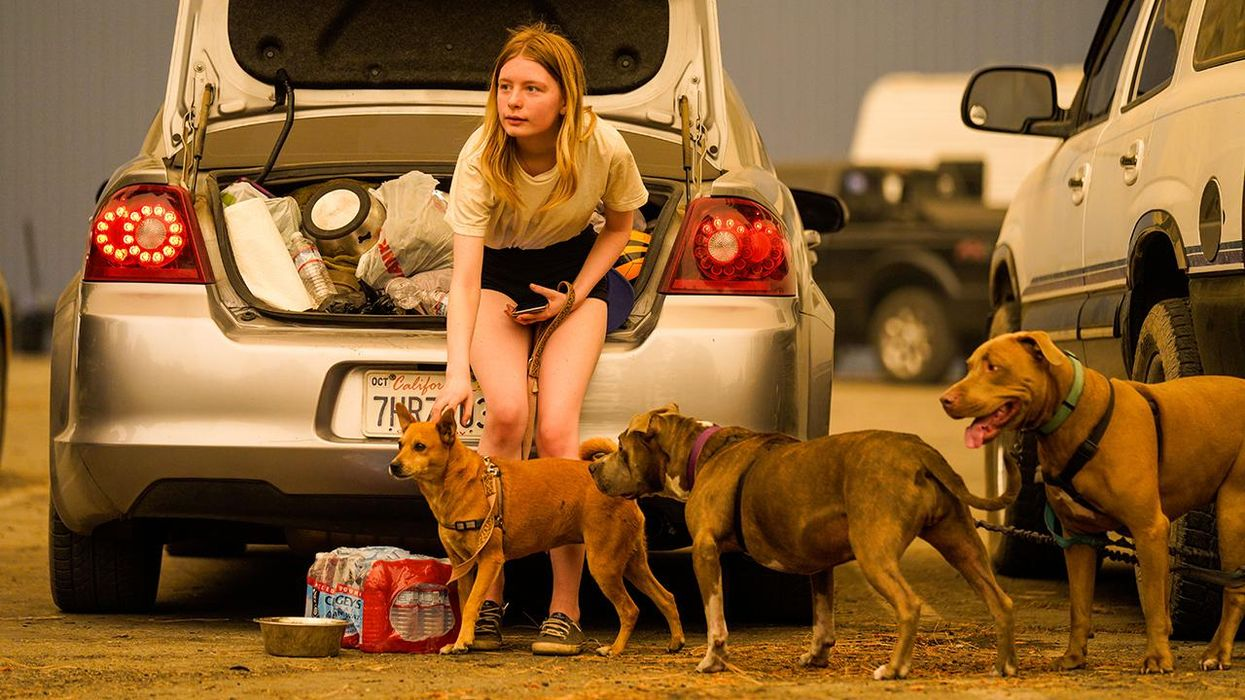 How to Evacuate With Pets During a Natural Disaster