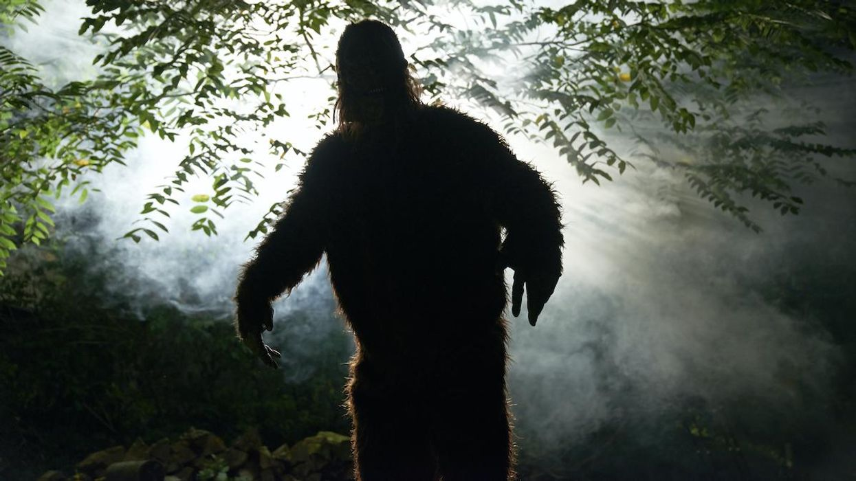 Could a 'Bigfoot Hunting Season' Promote Tourism and Wildlife Protection?