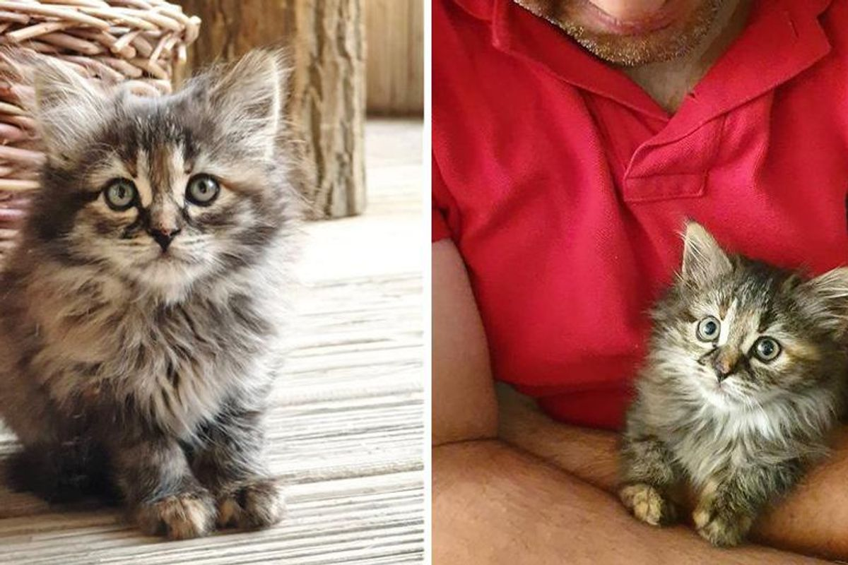 Kitten Found as an Orphan, Gets a Visit from Kind Family and Her Life is Turned Around